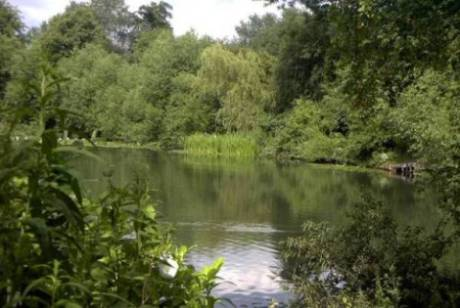 Mayfield Grove nature reserve