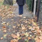 Tree detritus on Chaloners Road